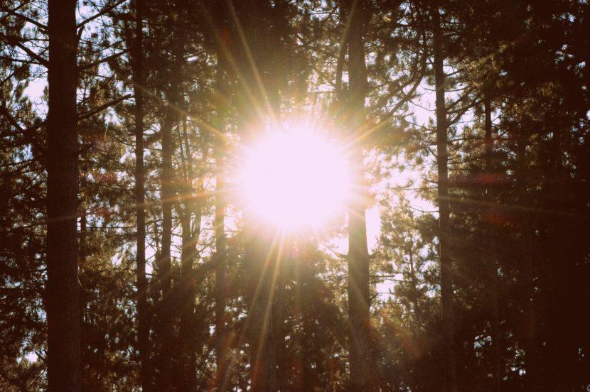 Die Sonne blitzt durch Bäume.